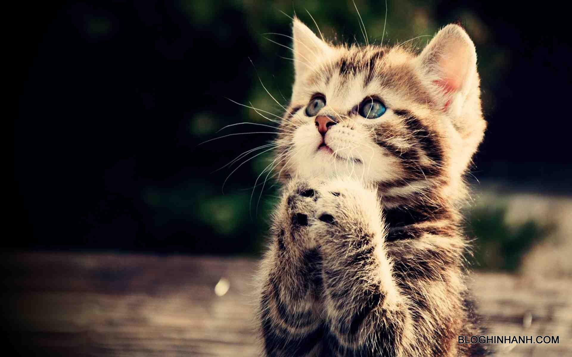 hình ảnh mèo oggy và những chú gián tinh nghịch