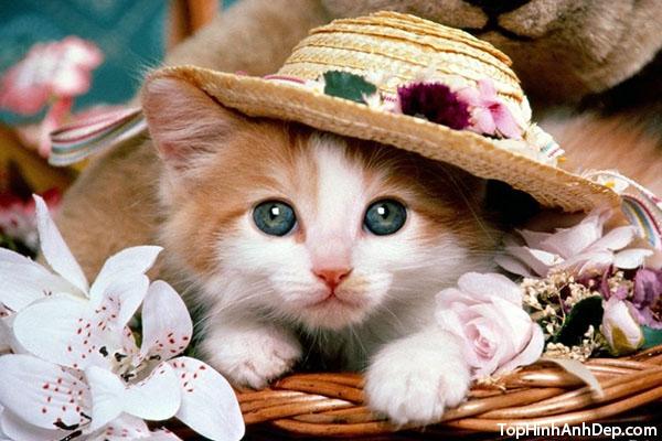 ảnh mèo đội mũ