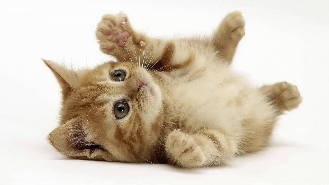 hình ảnh mèo yêu nhau
