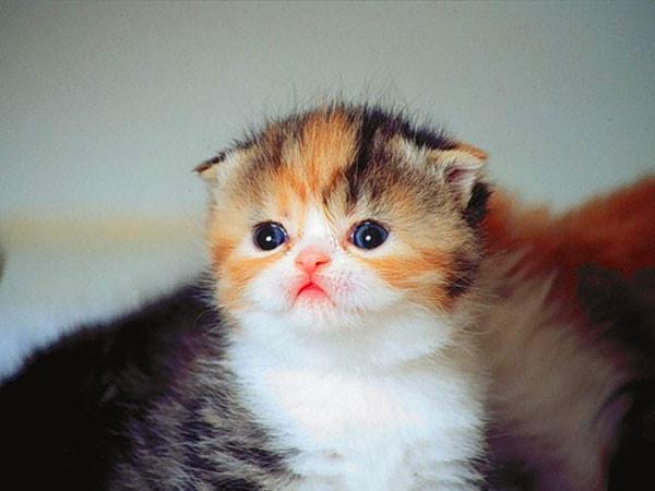 ảnh mèo tom buồn