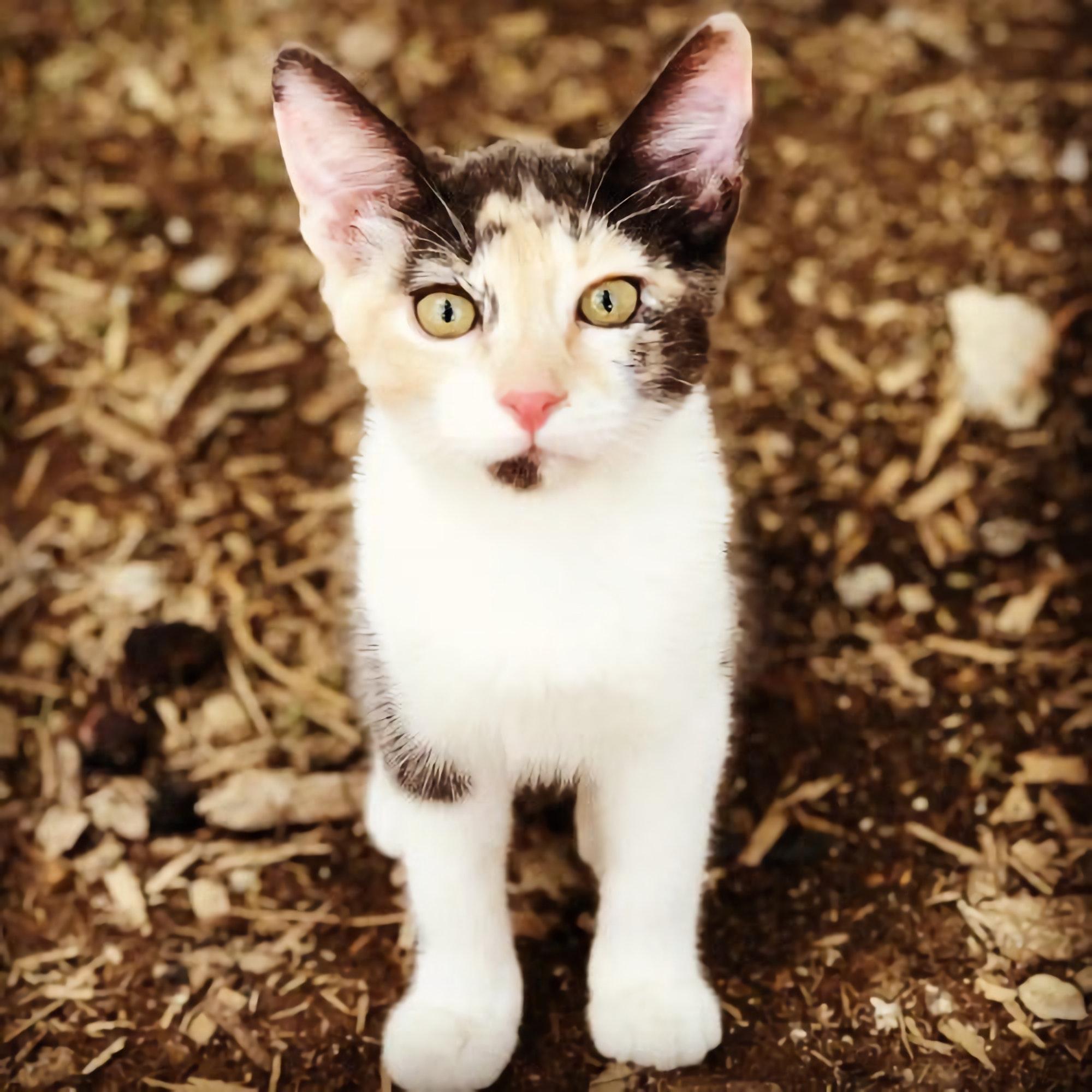 ảnh mèo kitty