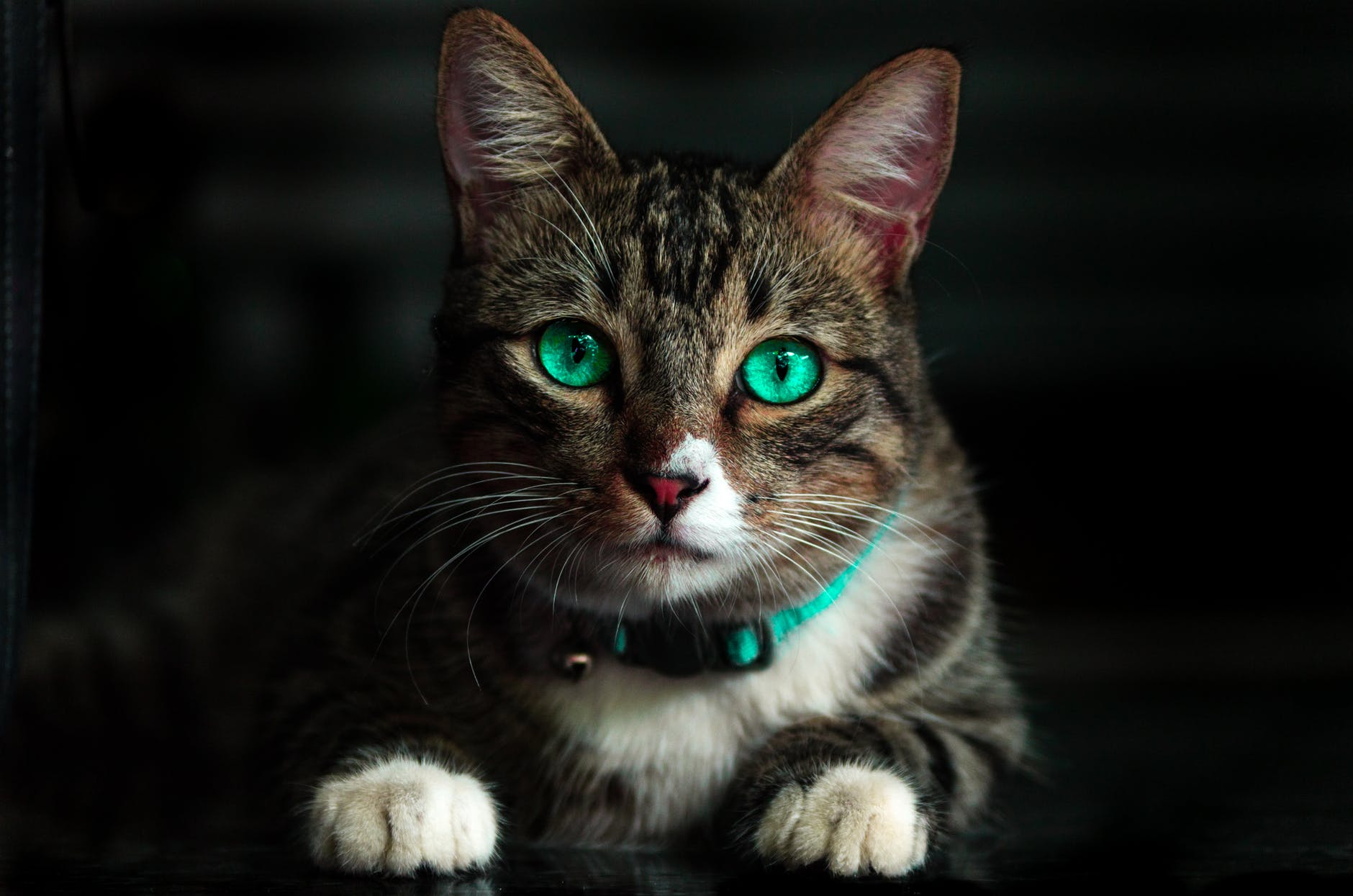ảnh mèo đáng yêu