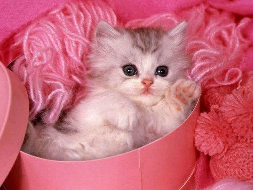 ảnh mèo ôm hoa