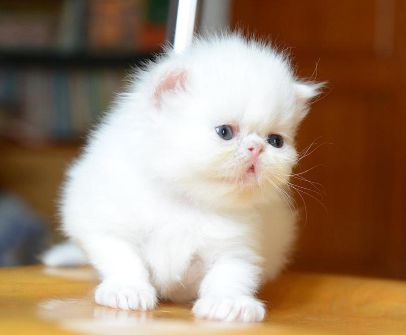 ảnh con mèo 3d