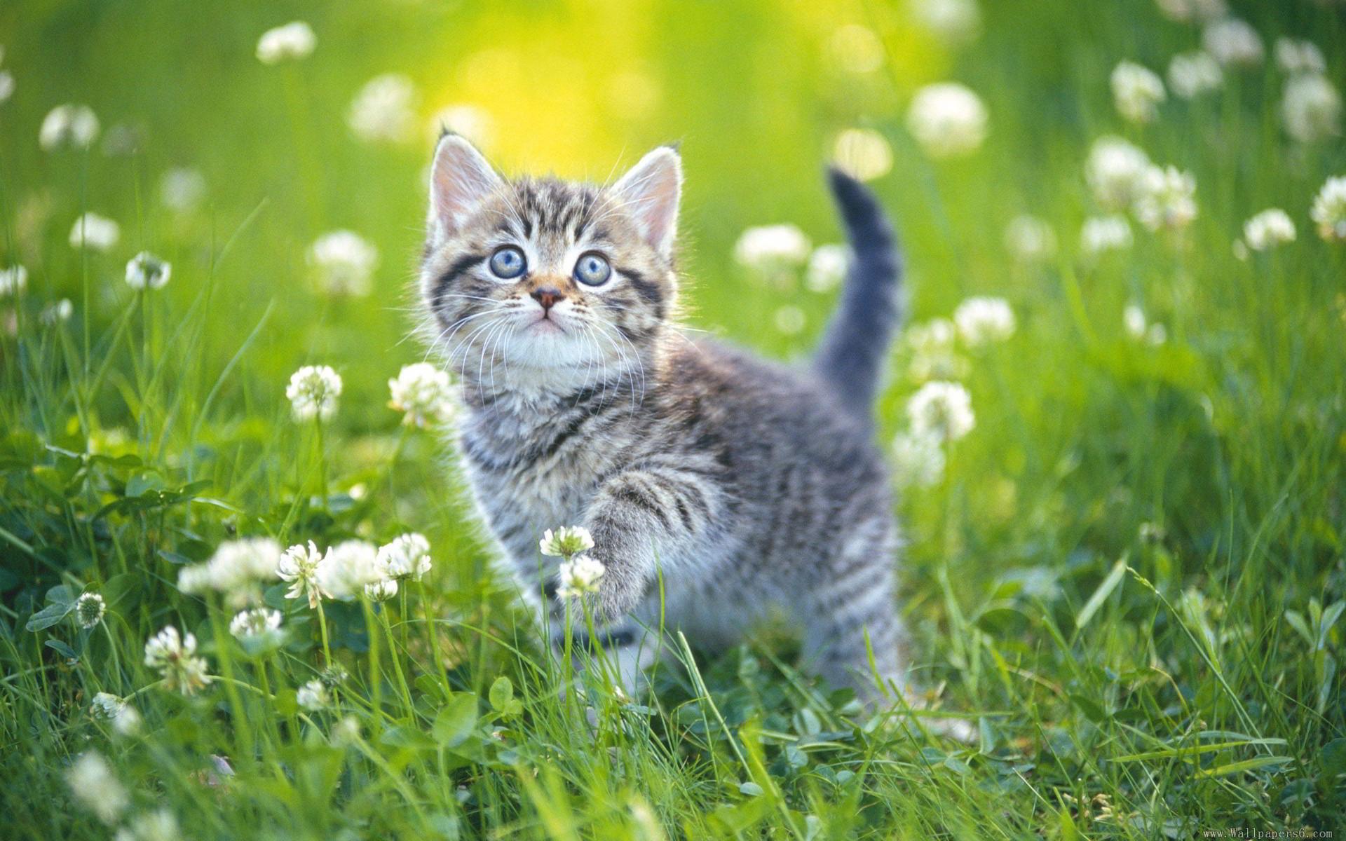 ảnh mèo vàng