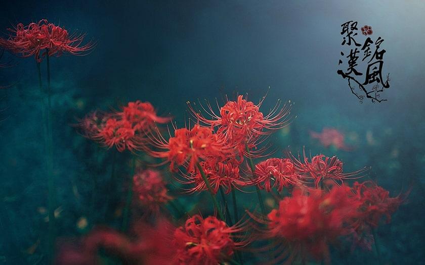 Hình nền của bạch dương đẹp màu đỏ