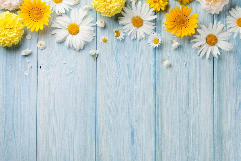 Hình nền hoa đơn giản đẹp