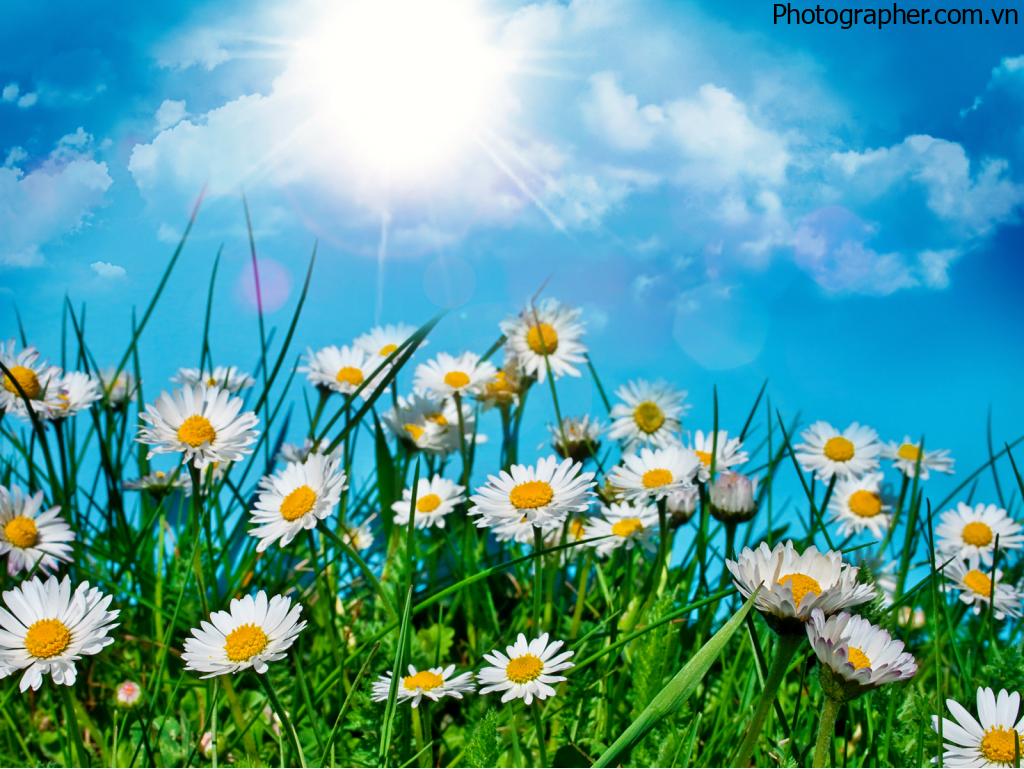 Tổng hợp những hình ảnh mùa hè đẹp nhất