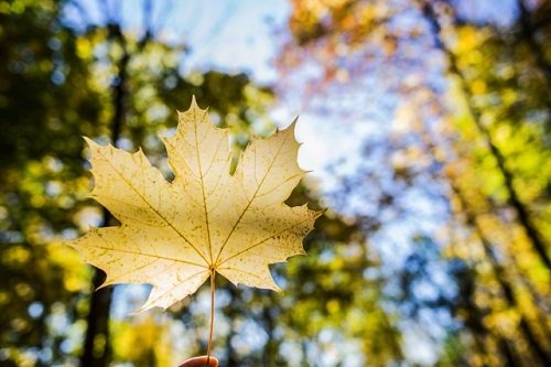 Chùm thơ về tình yêu của cây và lá