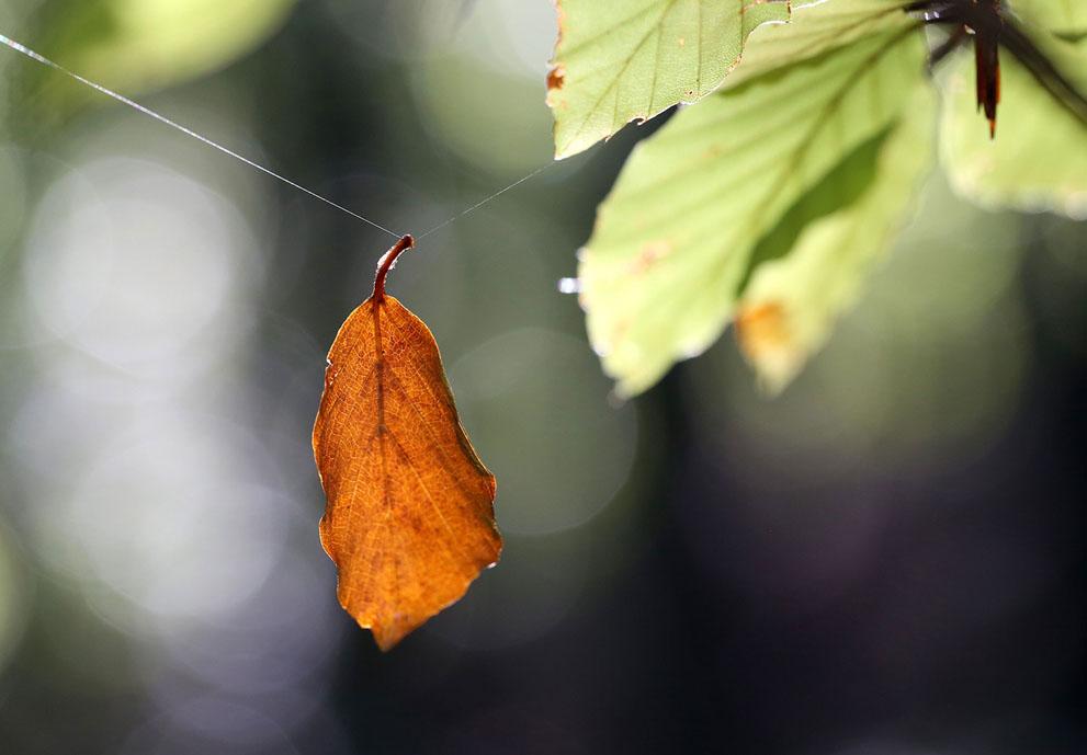 Tổng hợp tất cả các hình ảnh về lá đẹp