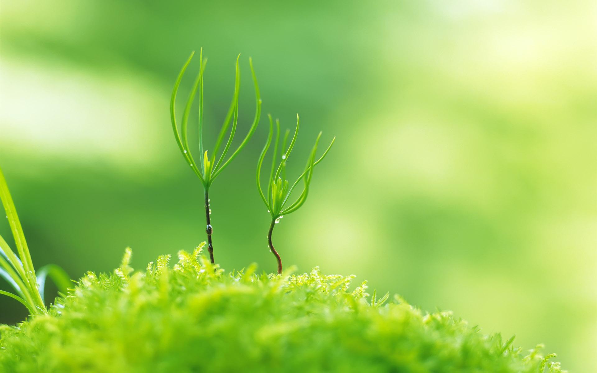 Tổng hợp những hình ảnh đẹp về chồi non xanh tươi