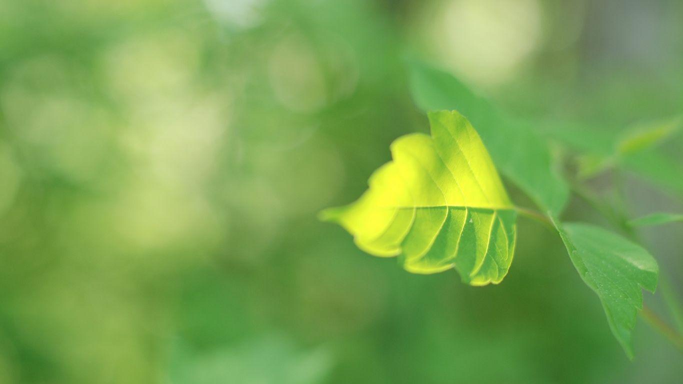 Tổng hợp những hình ảnh mang thông điệp về hy vọng và niềm tin vào cuộc sống