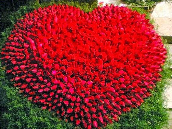 Hoa-hong-cho-valentine-2