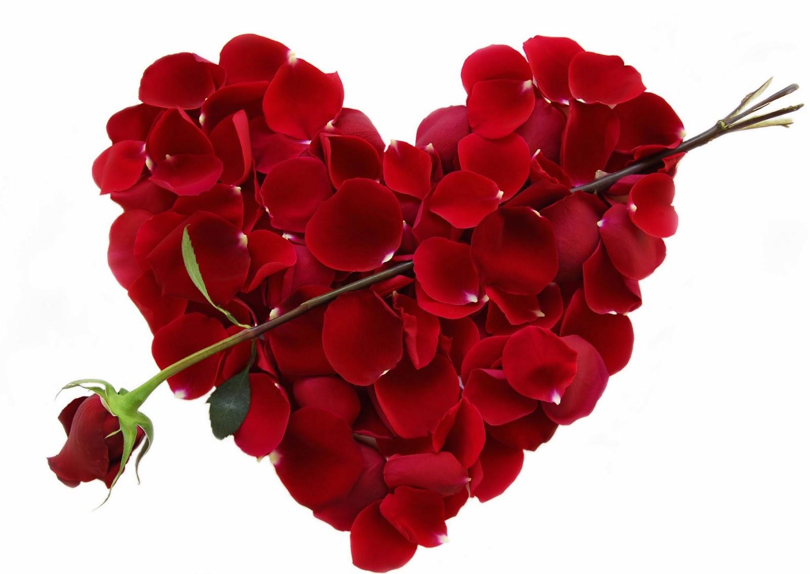 Hoa-hong-cho-valentine-6