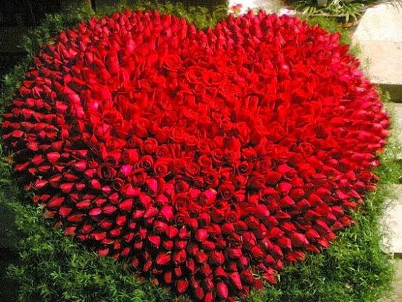 Rose-hoa-hoa hồng-to-tình yêu-trong-valentine-10
