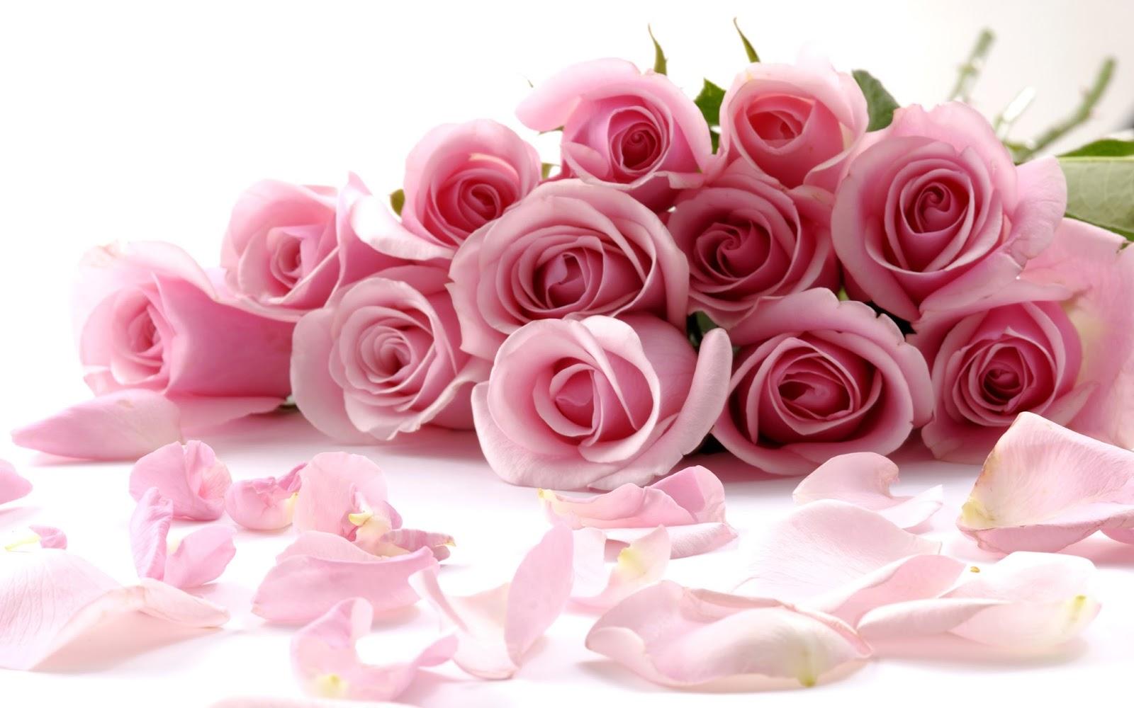 Flower-rose-red-love-in-valentine-3