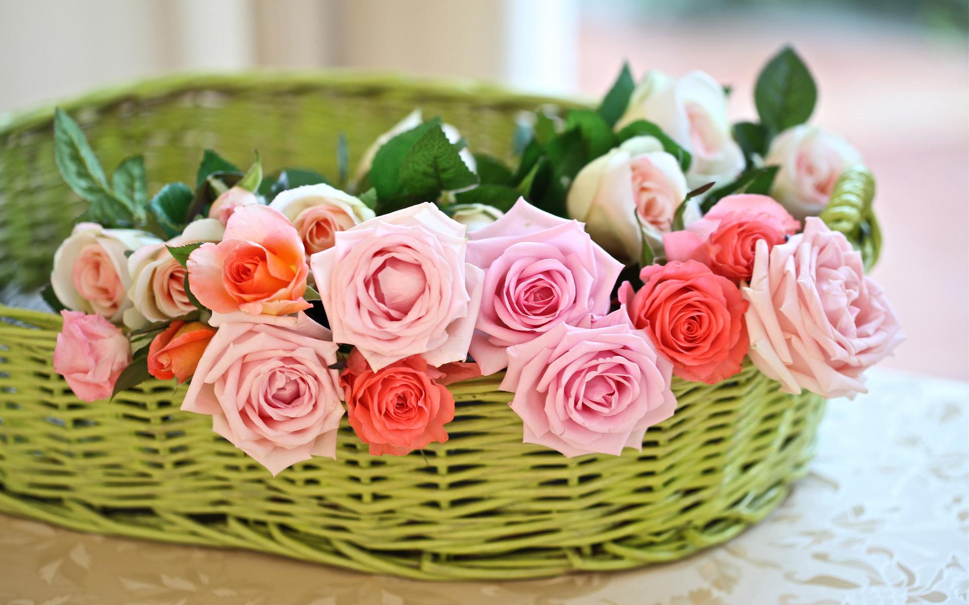 Flower-rose-red-love-in-valentine-5