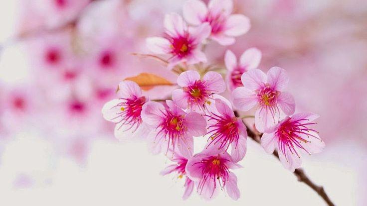 New Year-Spring-2017-Year-Old-Flower-Flower-Flower-2