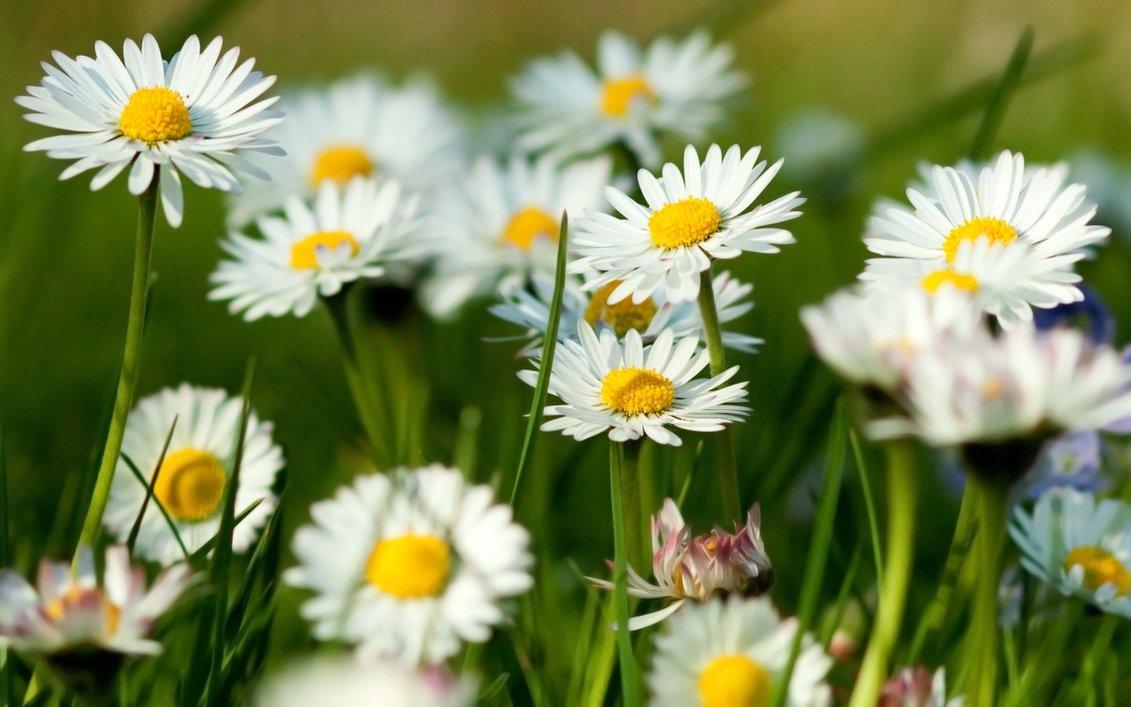 New Year-Spring-2017-Year-Old-Flower-Flower-Flower-8