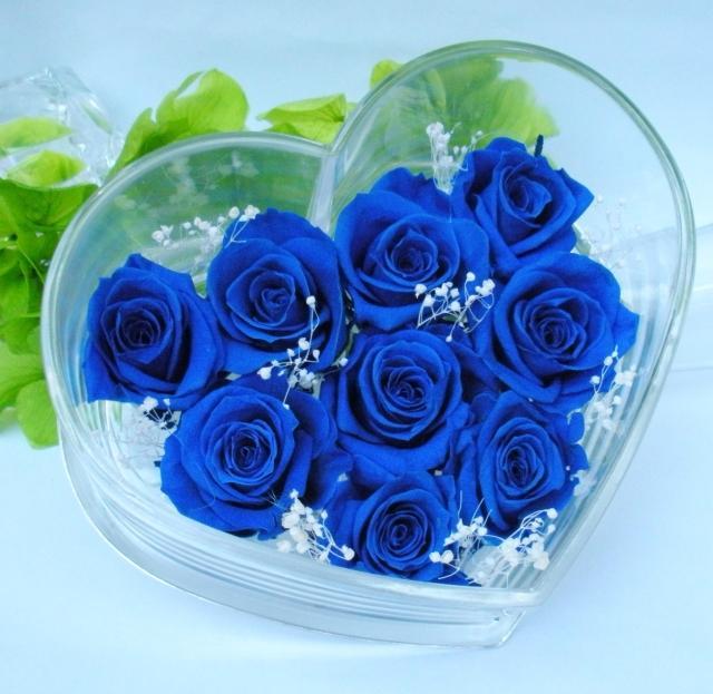 hoa-rose-blue-beautiful-tang-people-love-valentine-1