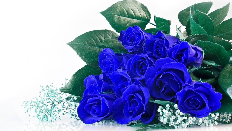 hoa-rose-blue-beautiful-tang-people-love-valentine-10