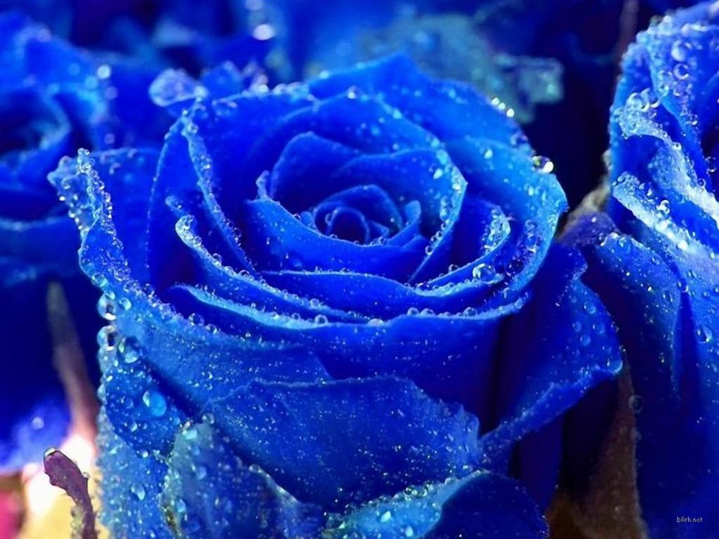 hoa-hong-xanh-dep-tang-nguoi-to-yeu-valentine-5