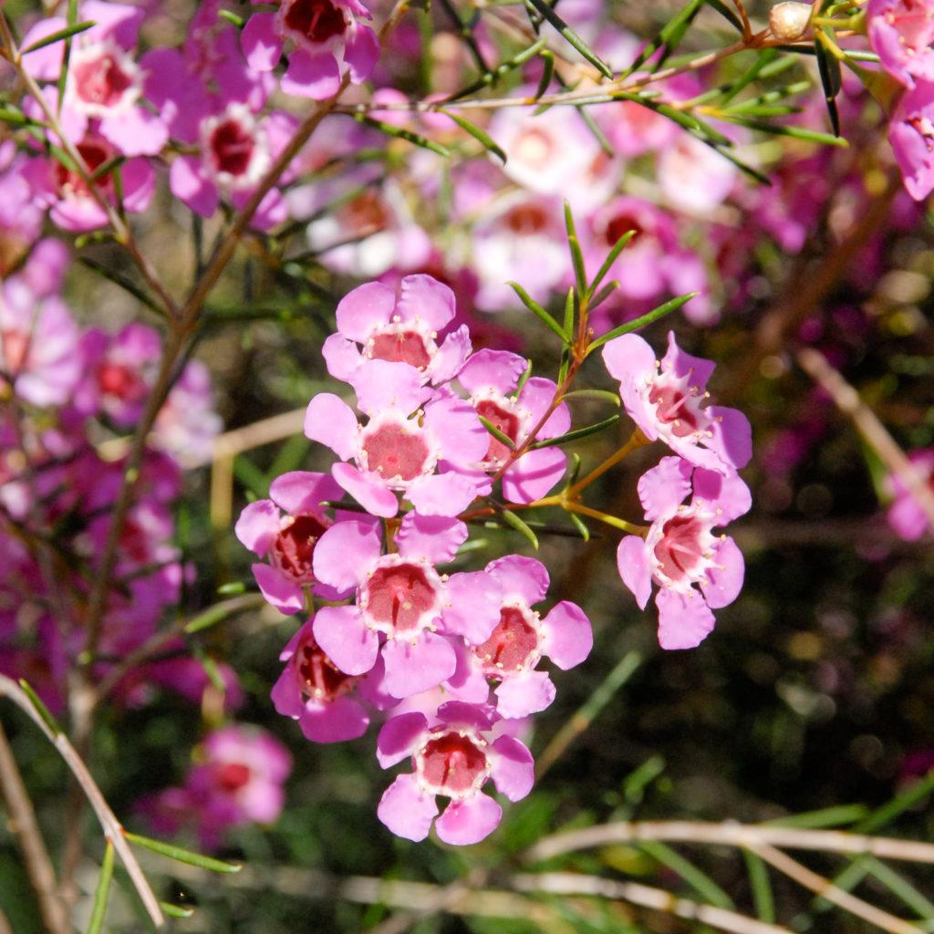 Tổng hợp những hình ảnh hoa liễu đẹp nhất