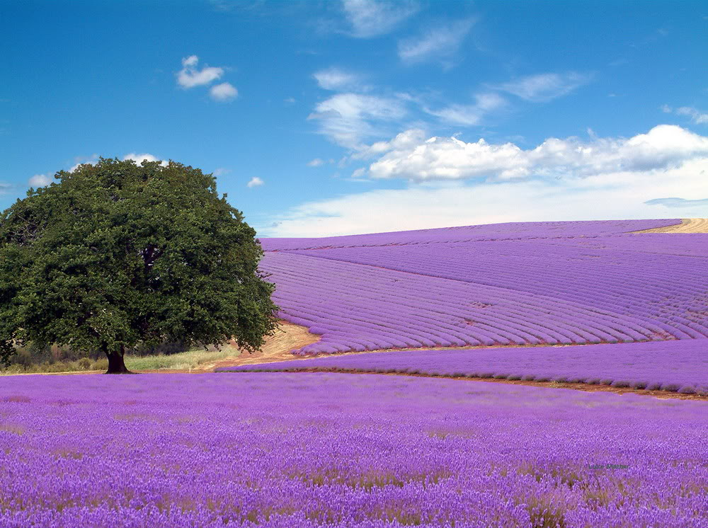 Field-of-flower-in-the-field-to-bring-1