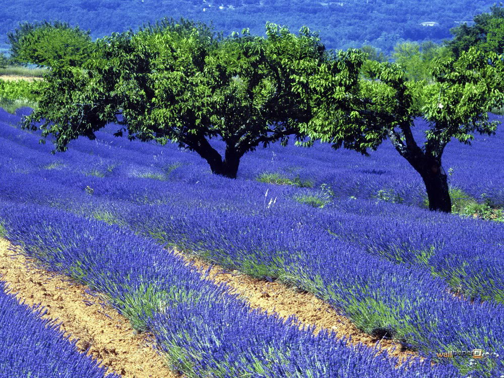 Field-of-flowers-in-the-field-to-display-13