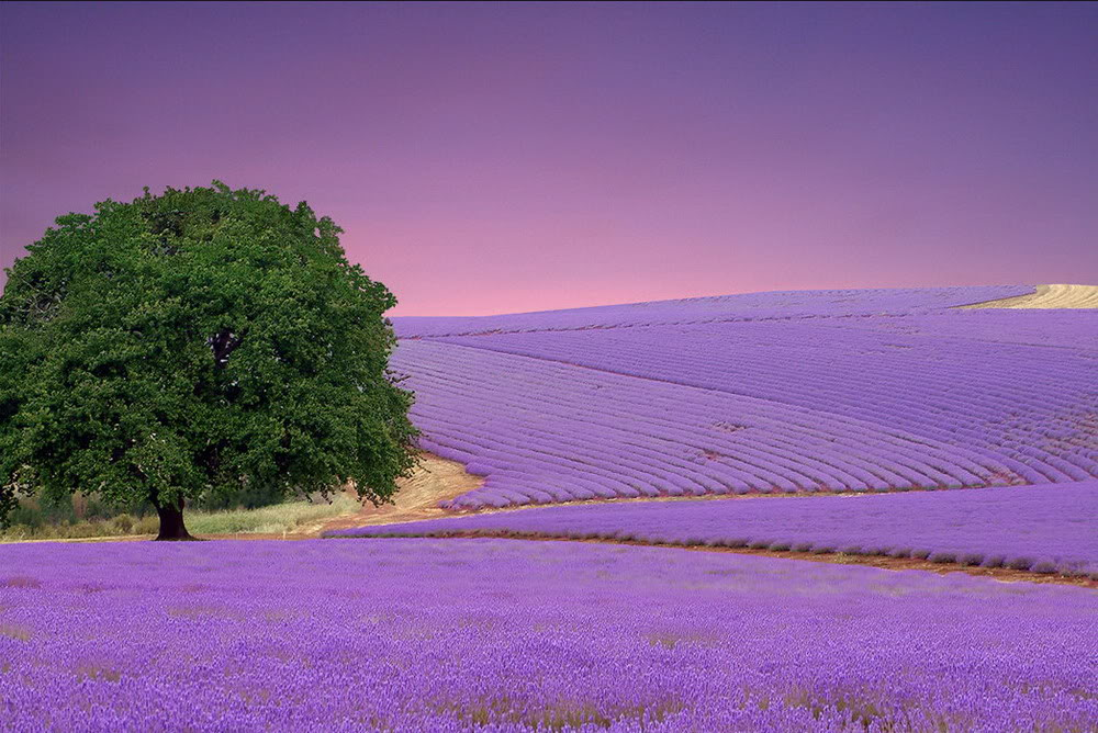Field-of-flowers-in-the-field-to-show-16