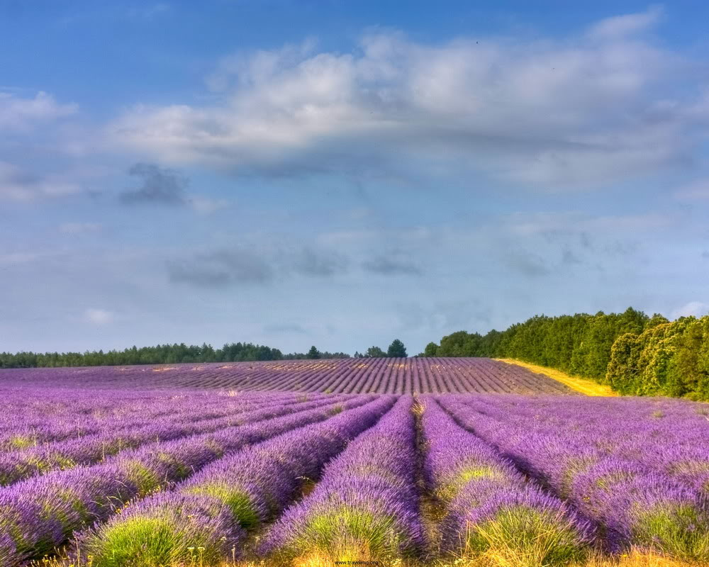 Field-of-flowers-in-direction-dep-mien-mang-2