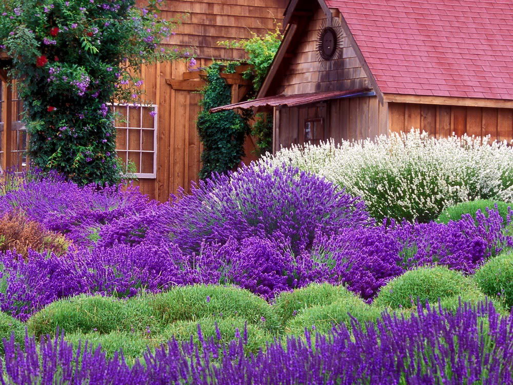 Field-of-flowers-in-the-field-to-display-27