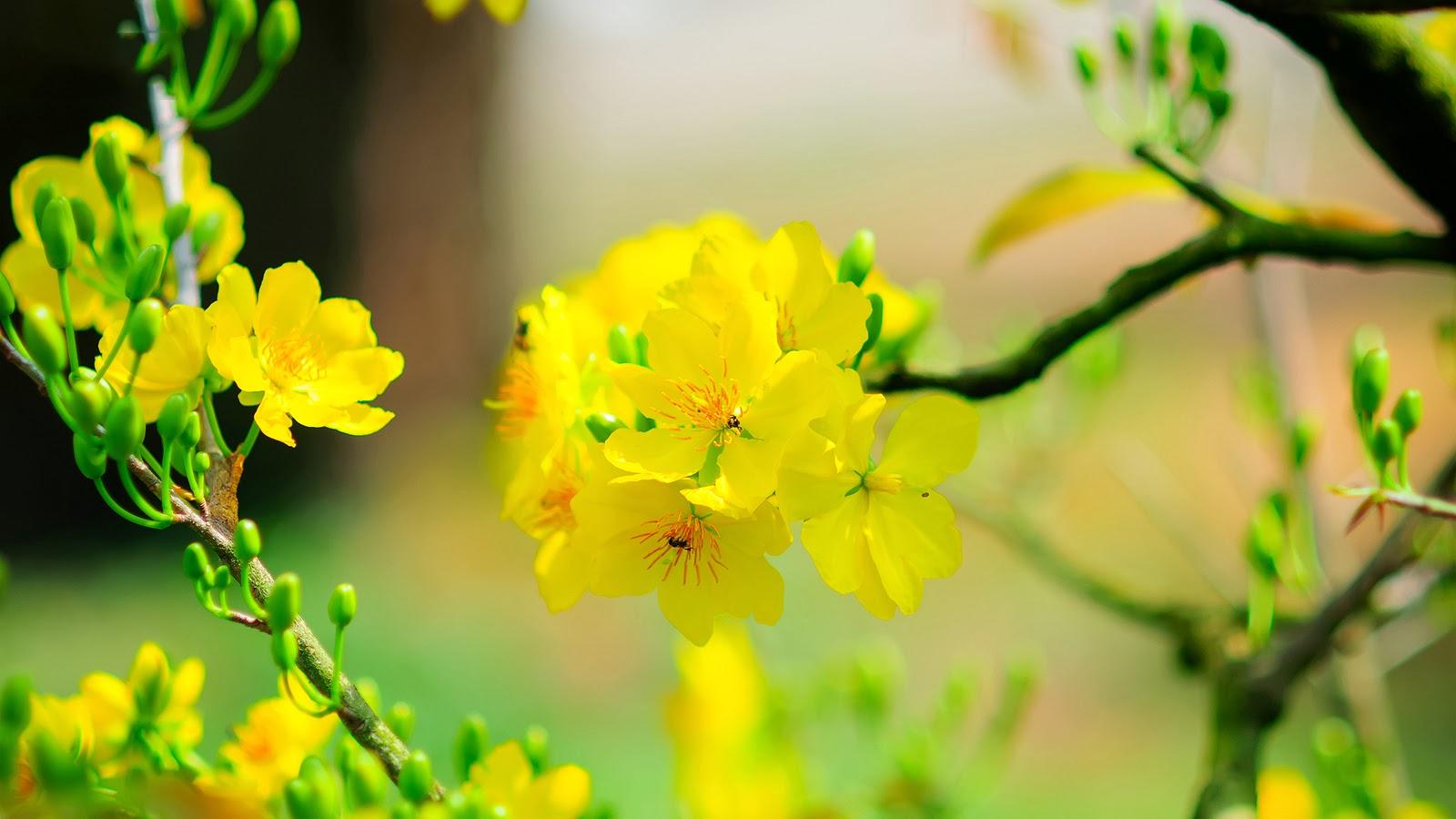 Hoa-hoa-nở-đẹp-tết-2016-1