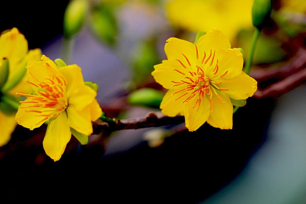 Hoa-hoa-nở-hoa-đẹp-tết-2016-2