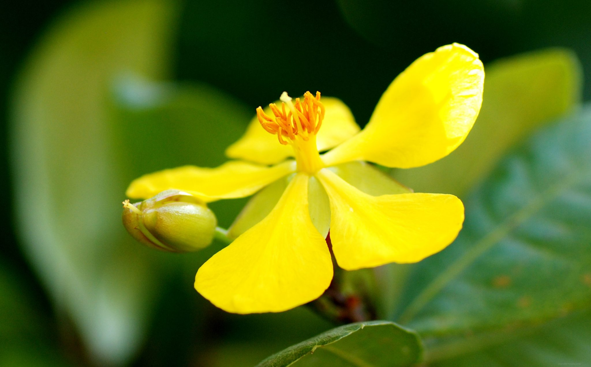 Hoa-hoa-nở-hoa-đẹp-tết-2016-21
