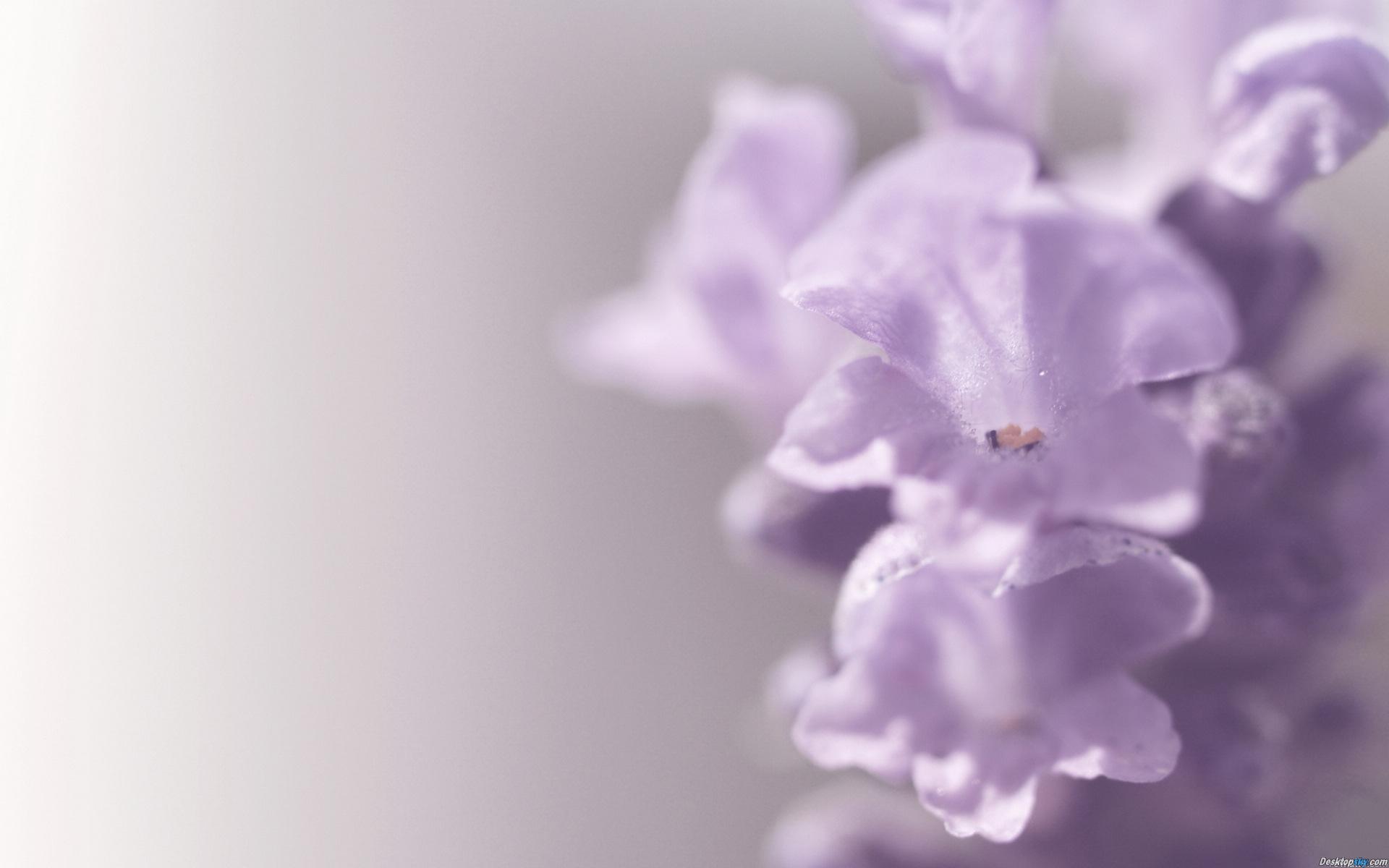 Hình trái tim-đẹp-hoa-màu-11