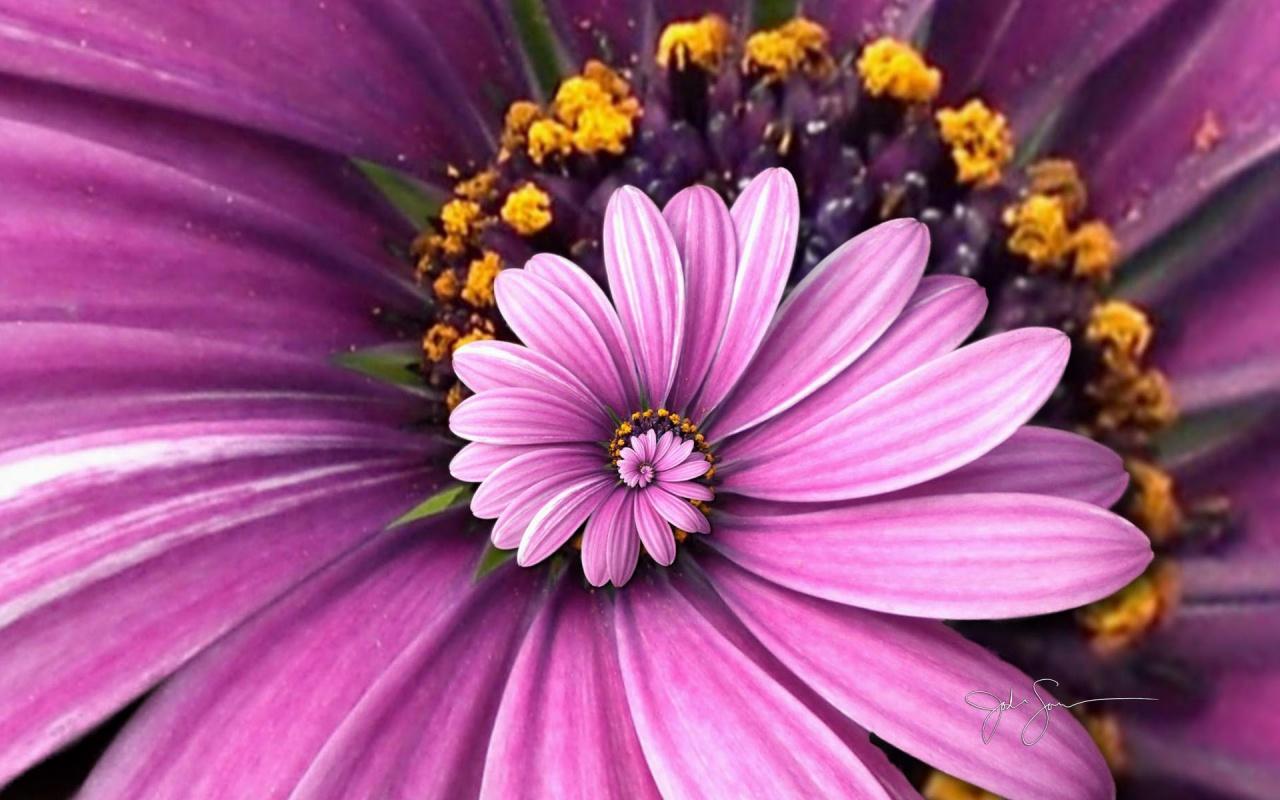 Hình trái tim-đẹp-hoa-màu-18