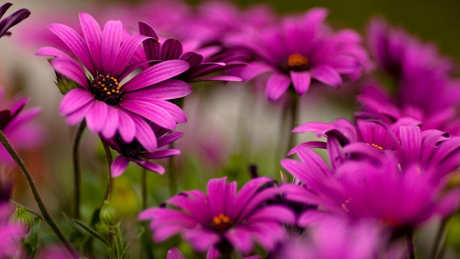 Hình trái tim-đẹp-hoa-màu-4