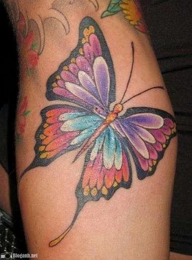 hình xăm bướm, hình xăm con bướm đẹp