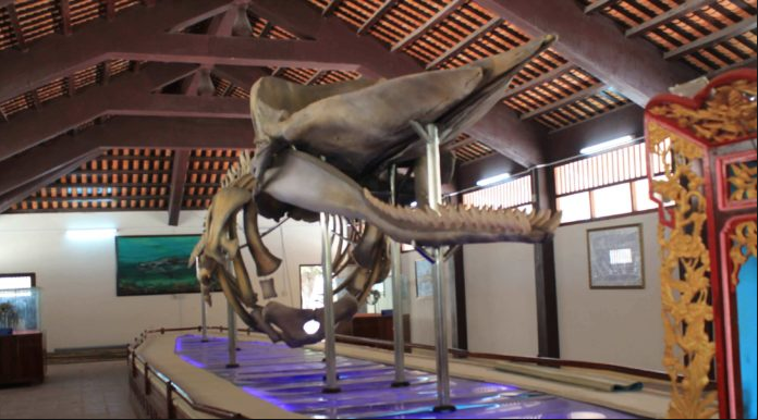 Bộ xương cá voi dài gần 20m tại nhà trưng bày hài cốt ông Hai Nam ở Vạn An Thạnh.