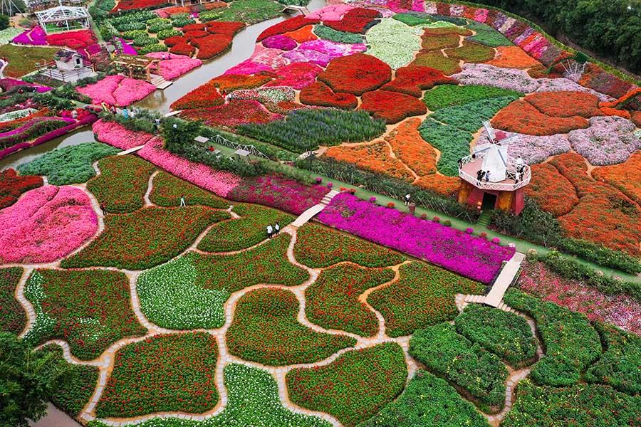 Thung lũng hoa xuân hồ tây