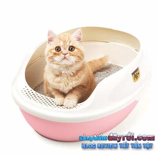 Các loại mèo giúp khử mùi tốt