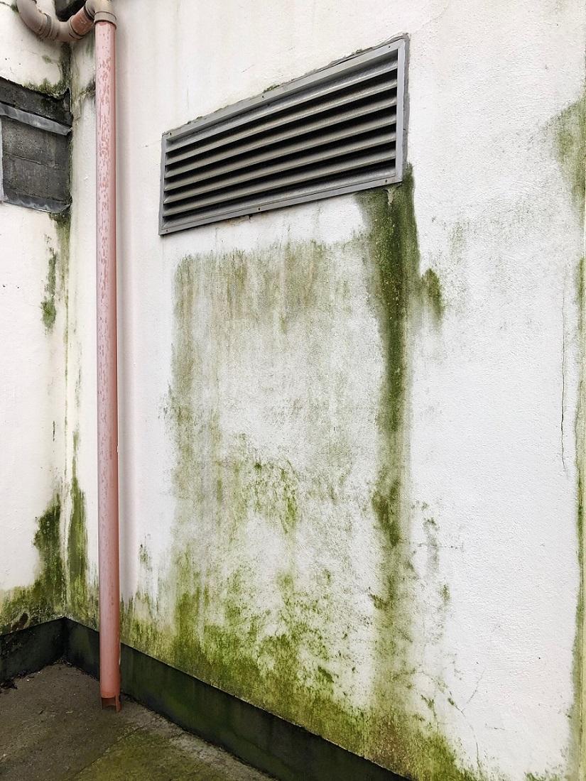 [Review] Kinh nghiệm chọn sơn Ngoại Thất chuẩn nhất