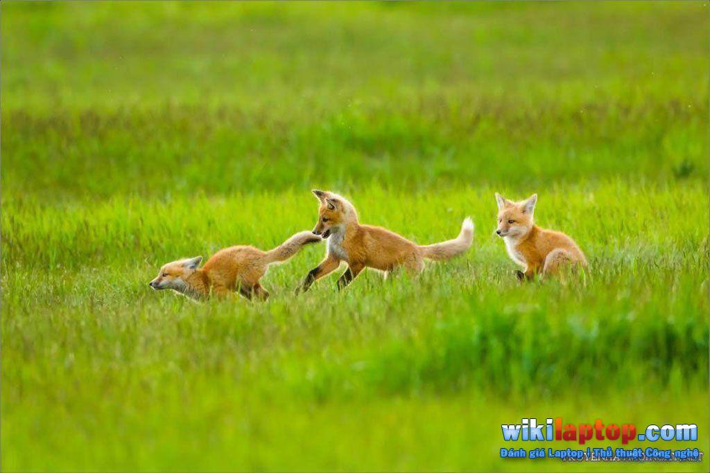 Hình ảnh động vật đẹp nhất thế giới