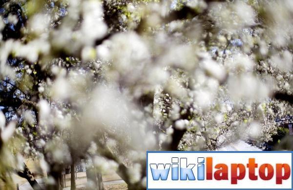 Ảnh về mùa xuân tươi đẹp trên khắp thế giới 3