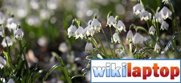 Ảnh về mùa xuân tươi đẹp trên khắp thế giới 7