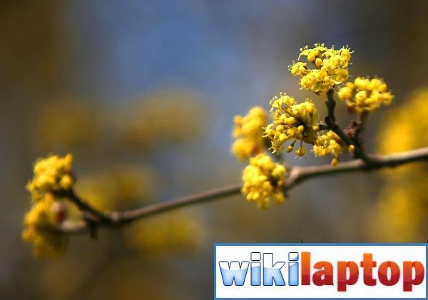 Ảnh về mùa xuân tươi đẹp trên khắp thế giới 11