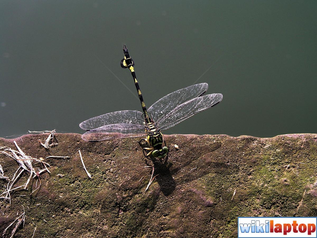 Hình ảnh chuồn chuồn 19 đẹp nhất