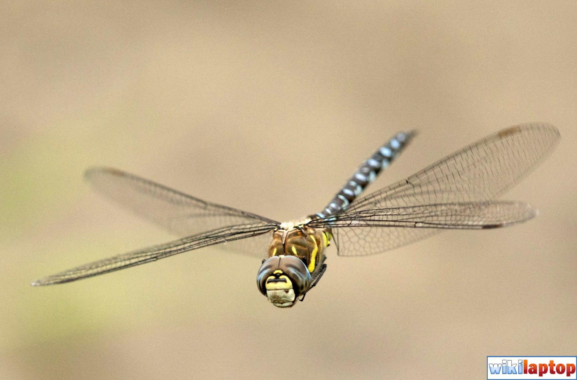 Hình ảnh chuồn chuồn 33 đẹp nhất