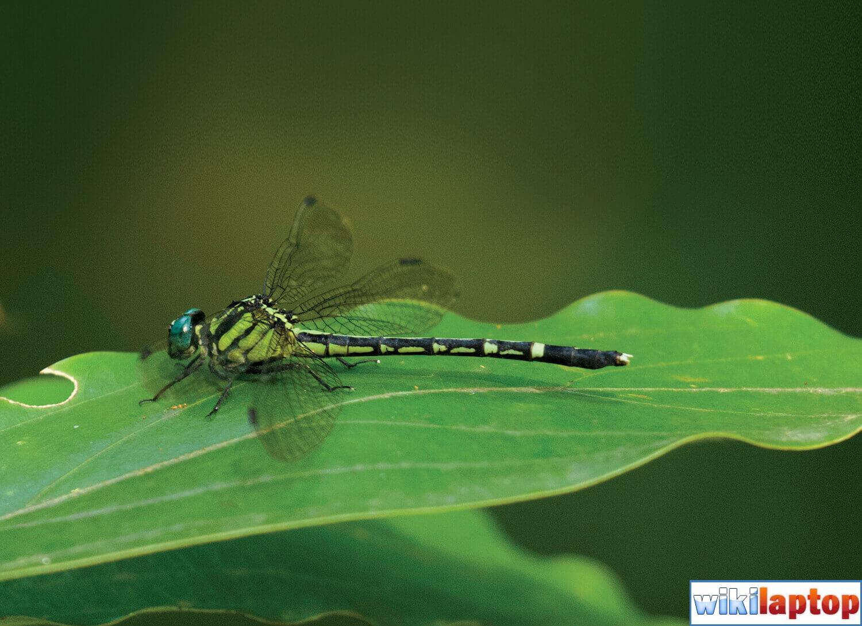 Hình ảnh chuồn chuồn 44 đẹp nhất